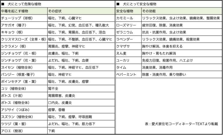 犬にとって危険な植物リスト,神戸,設計事務所