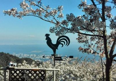 六甲山荘の桜,神戸,設計事務所