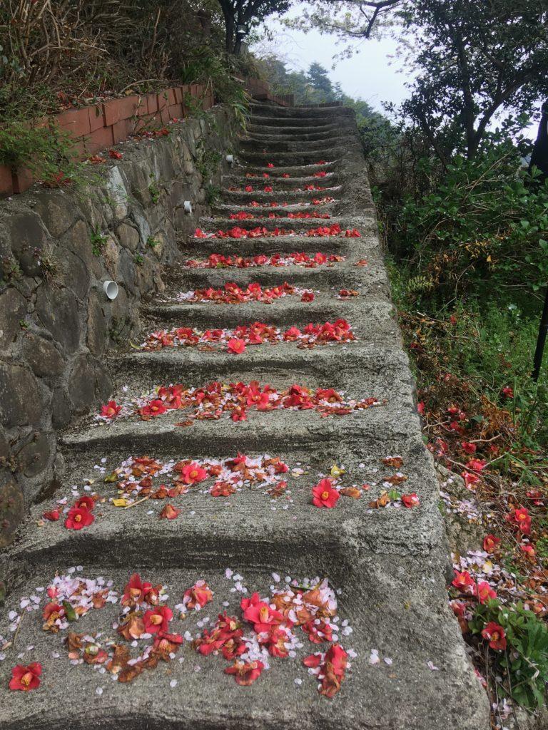 桜と椿の花階段